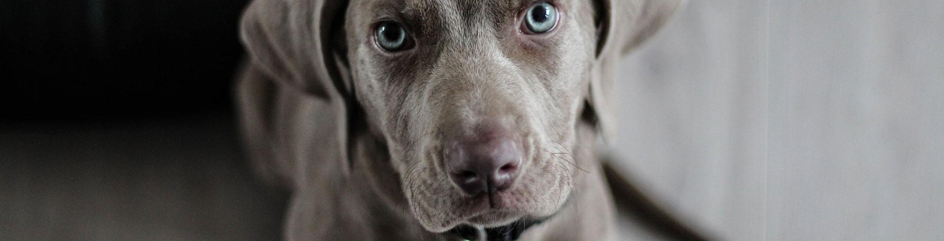 TIERRECHTSANWALT: Kanzlei für Tierrecht